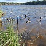 «Рыбачьте с нами» — Как научиться ловить карпа современными снастями