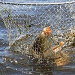 «Рыбачьте с нами» — Современная ловля карпа для начинающих