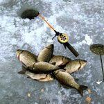 «Рыбачьте с нами» —  Об особенностях ловли карася со льда