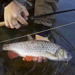 «Рыбачьте с нами» — Надежная мушка для голавля и хариуса