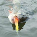 «Рыбачьте с нами» —  Пилькер на оснастке дропшот